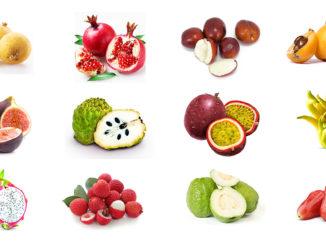 南加州的气候比较适合种植亚热带及热带水果。(图/California Tropical Fruit Trees)