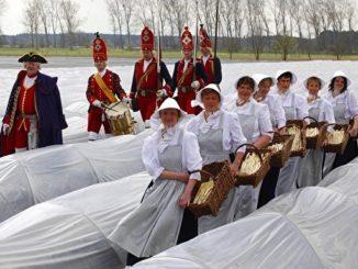 离柏林40公里的贝利茨(Beelitze)是德国著名的芦笋之乡,这里不仅有芦笋博物馆,还有各种和芦笋有关的文化活动。身穿白色芦笋装的芦笋女,在音乐的伴奏下,去地里采收芦笋。盛大的芦笋节上,芦笋女们还要献上芦笋舞……(Getty Images)
