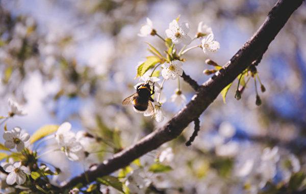 惊蛰时节,所有的虫豸都开始活动,肉眼看不到的细菌也大量增殖,有花粉过敏、呼吸道病症、皮肤问题和心理病症的人,此时容易受到温度湿度的刺激。(shutterstock)