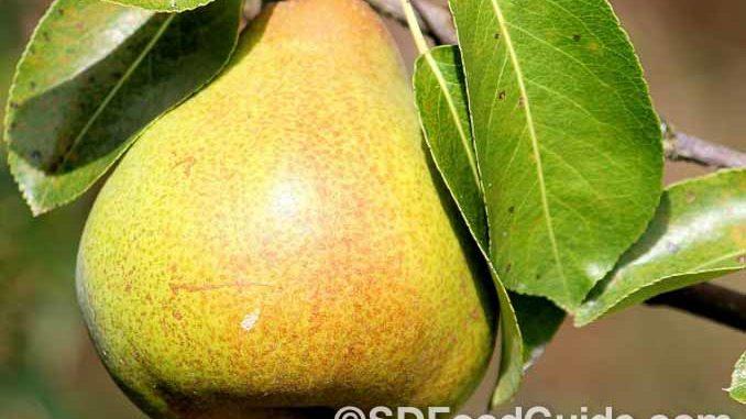 夏天很多人喜欢吃梨。